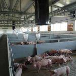 Cebaderos porcinos